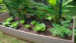 Aprende cómo elaborar un biohuerto casero en primavera