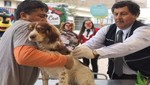 Minsa realizará Campaña Antirrábica Canina VAN CAN en 17 regiones del país