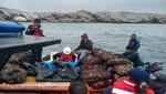 Operativo multisectorial permite incautar más de 9 toneladas de concha de abanico