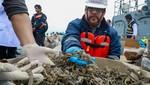 Decomisan más de 12.3 millones de caballitos de mar extraídos ilegalmente en el mar del Callao