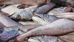 Produce autoriza el reinicio de actividades extractivas de merluza en Tumbes