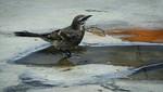 Municipalidad de Lima organizó evento de avistamiento de aves más grande del mundo
