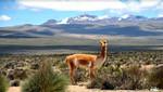 La majestuosa Reserva de Salinas y Aguada Blanca