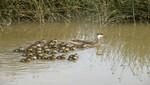 28 aniversario del Santuario Nacional Lagunas de Mejía, paraíso de aves