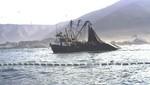 Decomisan 235 toneladas de anchoveta a embarcaciones pesqueras industriales