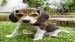 Crean perro fluorescente que ayudaría a encontrar cura al Parkinson