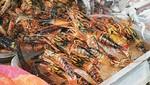 Decomisan más de 800 kilos de camarón en Arequipa
