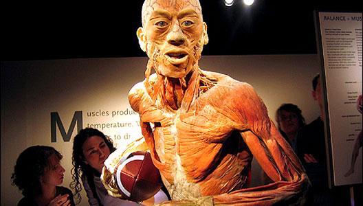 El cuerpo humano: real y fascinante
