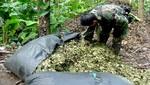 Polémica medida del gobierno de Humala: se suspende erradicación de cultivos ilegales de hoja de coca