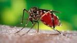 Luchar contra el dengue es prioridad