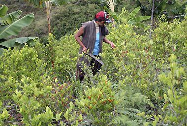 Elecciones Colombia 2010: Cocaína y guerrilla