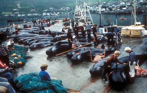 Islas Feroe, Récord en matanza de ballenas en 2010