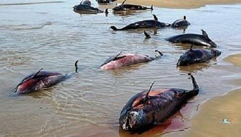¿Crees que la masiva muerte de aves guaneras haya influido en el bajo consumo de pescados?