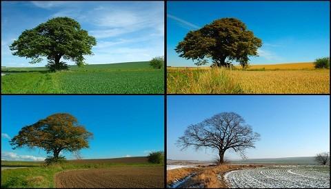 ¿Qué estación del año es tu favorita?