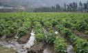 Un biohuerto es un área donde se practica la siembra, el manejo y conducción de cultivos con aplicación de materia orgánica